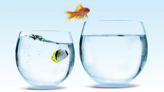 goldfish changing